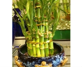 Bamboo Tower in Sitka AK, Bev's Flowers & Gifts