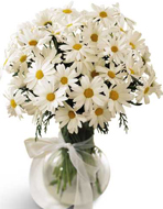 FTD� Daisy Vase in Nationwide MI, Wesley Berry Florist, Inc.