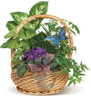 Butterfly Basket in Nationwide MI, Wesley Berry Florist, Inc.