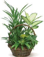 Bromeliad Basket in Nationwide MI, Wesley Berry Florist, Inc.