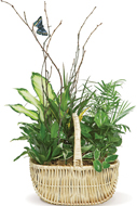 Butterfly Planter Basket in Nationwide MI, Wesley Berry Florist, Inc.