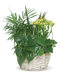 Plants in a Basket in Nationwide MI, Wesley Berry Florist, Inc.
