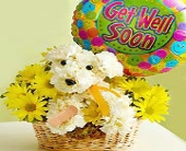 Get Well Dog in East Amherst NY, American Beauty Florists