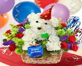 Birthday Dog in East Amherst NY, American Beauty Florists