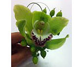 Cybidium Bout in Melbourne, Florida, Paradise Beach Florist & Gifts