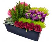 Des Plaines Flowers - Kiko''s Bento Box - Kiko's Flowers And Gifts