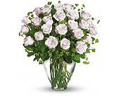 Orlando Flowers - 24 WHITE ROSE - Colonial Florist