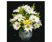 Daisy Bubble Bowl Arrangement in Mililani Town HI, Mililani Town Florist
