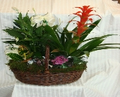 TAKE HOME LIVING PLANTER in Bellmore NY, Petite Florist