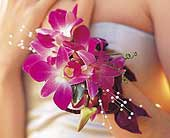 Fuchsia Orchids Wristlet in Bothell WA, The Bothell Florist