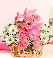 Princess Paws in Chambersburg PA, All Occasion Florist