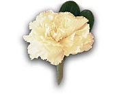 White Carnation Boutonniere in Burlington NJ, Stein Your Florist