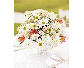Daisy Joy Centerpiece in Palm Springs CA, Palm Springs Florist, Inc.