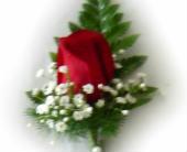 Red Boutonniere in Sanborn, New York, Treichler's Florist