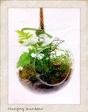 Hanging Fern Garden in Greeley, Colorado, Mariposa Plants & Flowers