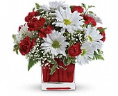 Red And White Delight by Teleflora in Cedar Rapids IA, Peck's Flower & Garden Shop