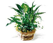 Foliage Planters & Dish Gardens in Wichita KS, Tillie's Flower Shop