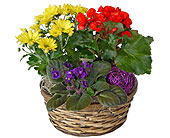 Bloomer Basket in Dallas TX, In Bloom Flowers, Gifts and More