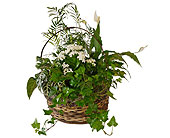White Garden Basket in Dallas TX, In Bloom Flowers, Gifts and More