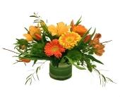 Lovely Sunshowers in Richboro, Pennsylvania, Fireside Flowers