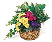 European Garden PlanterStarting at $54.95 in Wichita KS, Tillie's Flower Shop