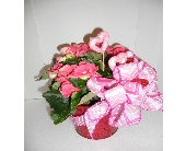Begonia  in Nashville TN, Emma's Flowers & Gifts, Inc.