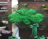 SHAMROCK in New Rochelle, New York, Enchanted Flower Boutique