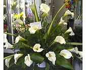 Cala Lily Basket Arrangement in New Rochelle NY, Enchanted Flower Boutique