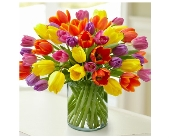 Enchanting Tulips in Bradenton FL, Ms. Scarlett's Flowers & Gifts