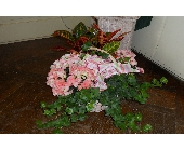 Beautiful Begonia Garden in Nashville TN, Emma's Flowers & Gifts, Inc.