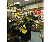 Yellow Calla Lilies in New Castle PA, Butz Flowers & Gifts