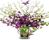 Orchids and Butterflies in Mesa, Arizona, Red Mountain Florist, Inc.