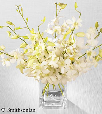 White Whispers Dendrobium Orchid Bouquet in Vienna VA, Vienna Florist & Gifts