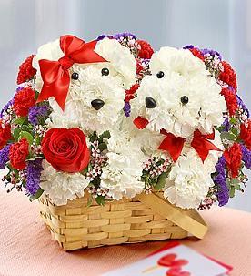 PUPPY LOVE  in Vienna, Virginia, Vienna Florist & Gifts