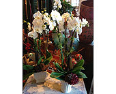 Sensational Holiday Orchids in Napa CA, Beau Fleurs Napa Valley Flowers
