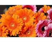 Orange Mix Flowers Local and Nationwide Guaranteed Delivery - GoFlorist.com