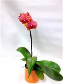Orange Orchid in Belleville ON, Live, Love and Laugh Flowers, Antiques and Gifts