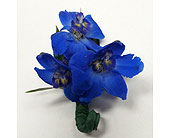 Blue Delphinium Bout. in Raleigh NC, Gingerbread House Florist - Raleigh NC