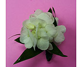 White Hydrangea Bout. in Raleigh NC, Gingerbread House Florist - Raleigh NC