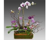 Mother's Orchids in East Syracuse NY, Whistlestop Florist Inc
