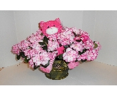 Azalea with Stuffed Animal  in Nashville TN, Emma's Flowers & Gifts, Inc.
