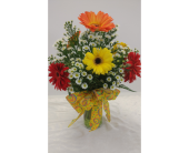 Woodland''s Own 6 Gerbera Daisy in Kalispell MT, Woodland Floral & Gifts