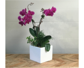 Orchid Garden - Ceramic Container in Santa Cruz, California, Ferrari Florist