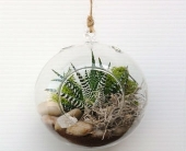 Hanging terrarium  in North Vancouver BC, Special Moments Flowers And Gifts