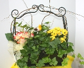 EUROGARDEN IN METAL BASKET in Knoxville TN, Crouch Florist