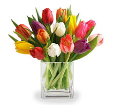 Mixed Tulips in Nationwide MI, Wesley Berry Florist, Inc.