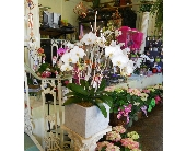 Double Orchid in Nashville TN, Emma's Flowers & Gifts, Inc.