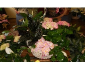 Large Garden Basket in Nashville TN, Emma's Flowers & Gifts, Inc.