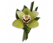 Green Orchid Boutonniere in Norwalk CT, Bruce's Flowers & Greenhouses