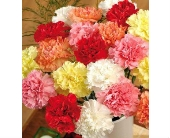 Super Summer Special 25 Fresh Cut Carnations in Kingston ON, Pam's Flower Garden